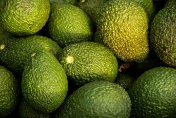 hass-avocado-882635_1920